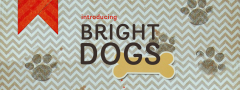 Introducing Bright Dogs
